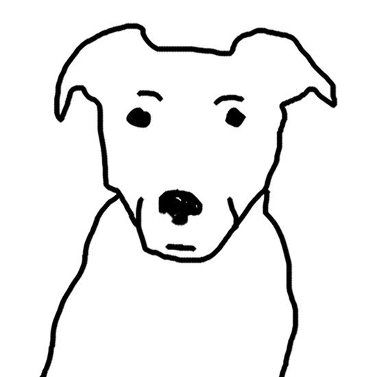 dog black background
